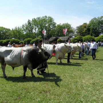 XXII. Alföldi Állattenyésztési és Mezőgazda Napok