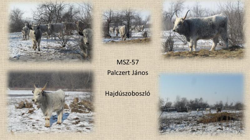 MSZ-057 Palcer Janos
