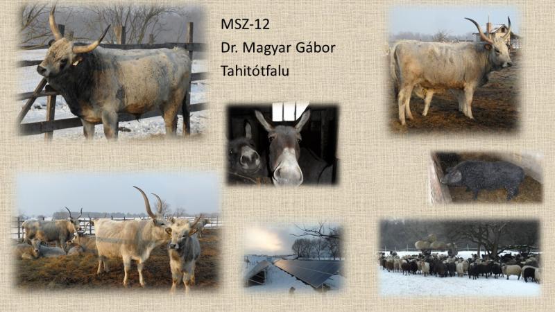 MSZ-12 dr.Magyar Gabor