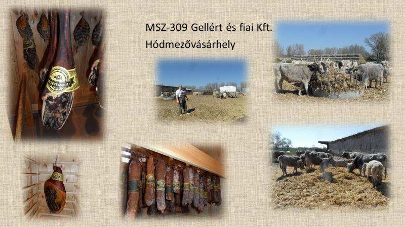 MSZ309_Gellert és Fiai Kft.