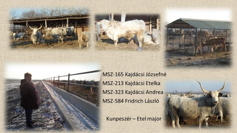 MSZ-165 Kajdácsi Józsefné MSZ-213 Kajdácsi Etelka MSZ-323 Kajdácsi Andrea MSZ-584 Fridrich László