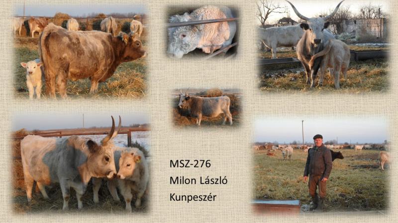 MSZ-276 Milon László