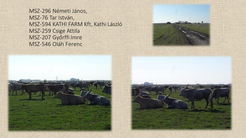 MSZ-296 Németi János, MSZ-76 Tar István, MSZ-594 KATHI FARM Kft, Kathi László MSZ-259 Csige Attila M