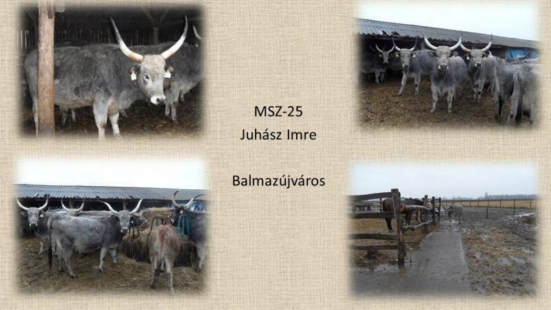 MSZ-25 Juhász Imre
