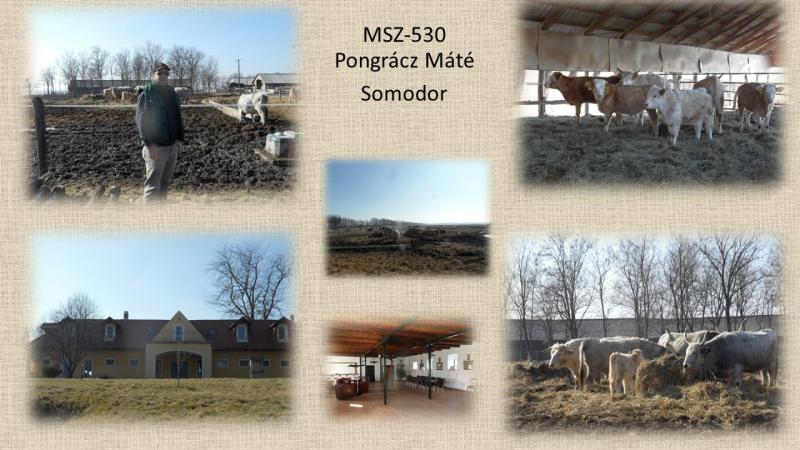 MSZ530_Pongracz Mate