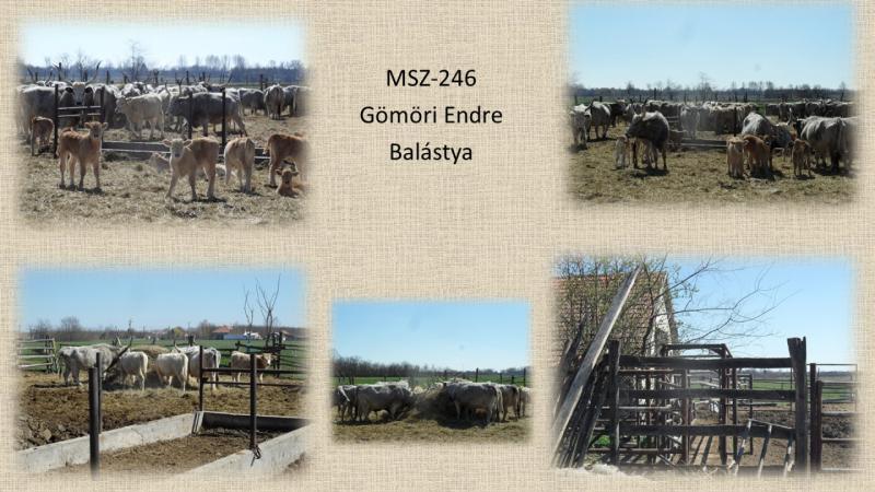 MSZ246_Gomori Endre