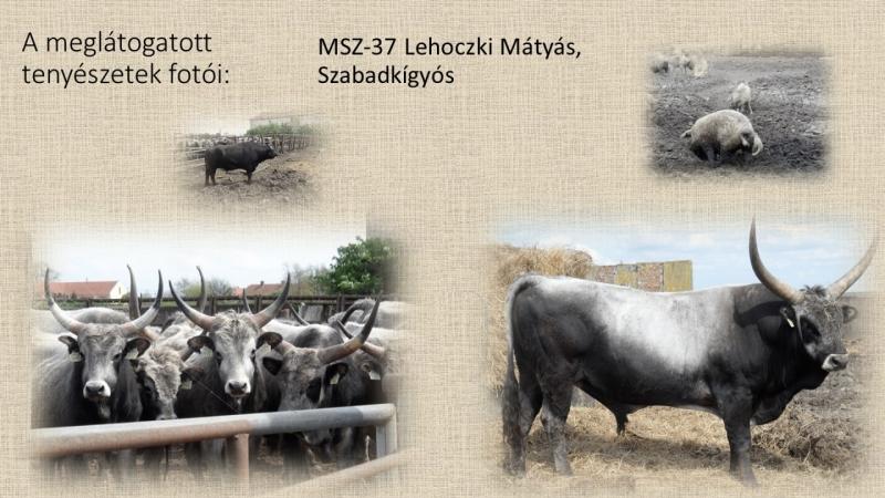 MSZ-37 Lehoczki Mátyás