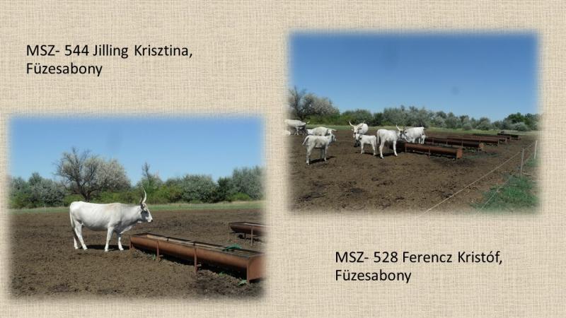 MSZ- 544 Jilling Krisztina; MSZ- 528 Ferencz Kristóf