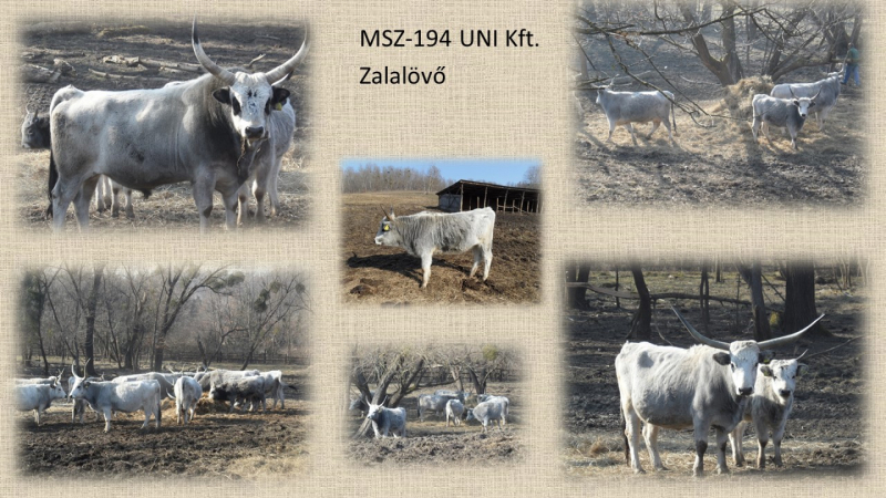 MSZ194_Uni Kft