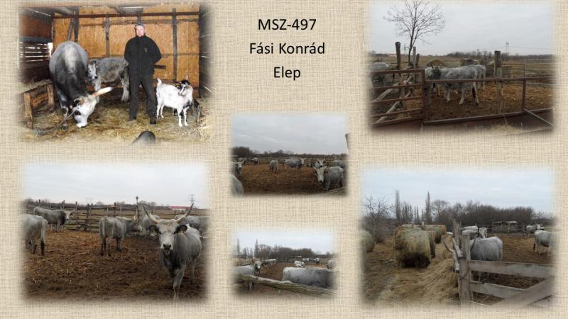 MSZ-497 Fási Konrád