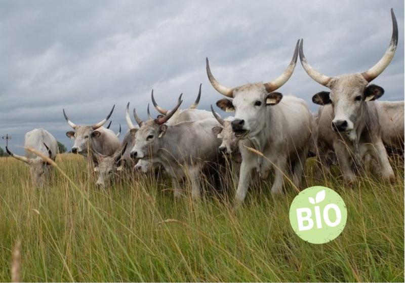 MEGHÍVÓ-bio marhahús piaci lehetőségei előadás