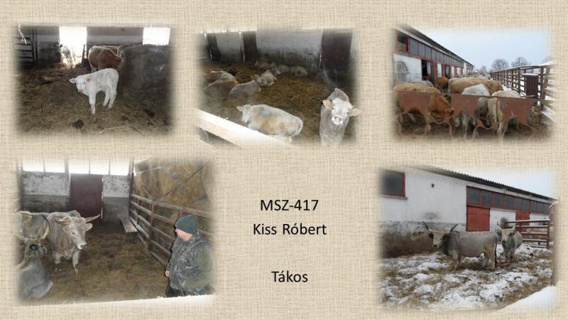 MSZ-417 Kiss Róbert