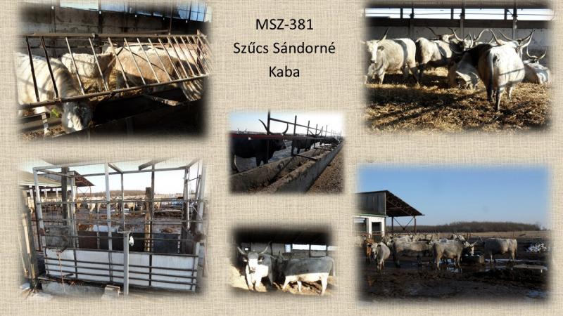 MSZ-381 Szűcs Sandorne