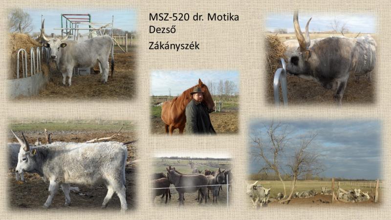 MSZ520_Dr. Motika Dezso