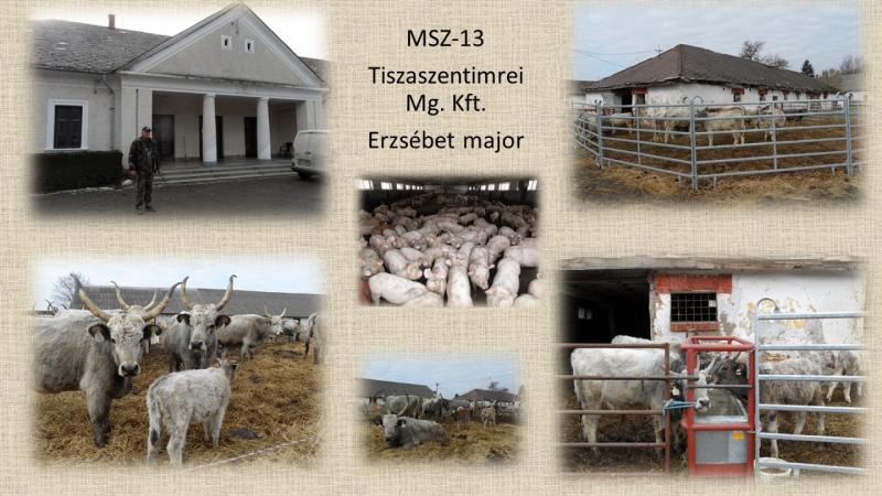 MSZ-013 Tiszaszentimre