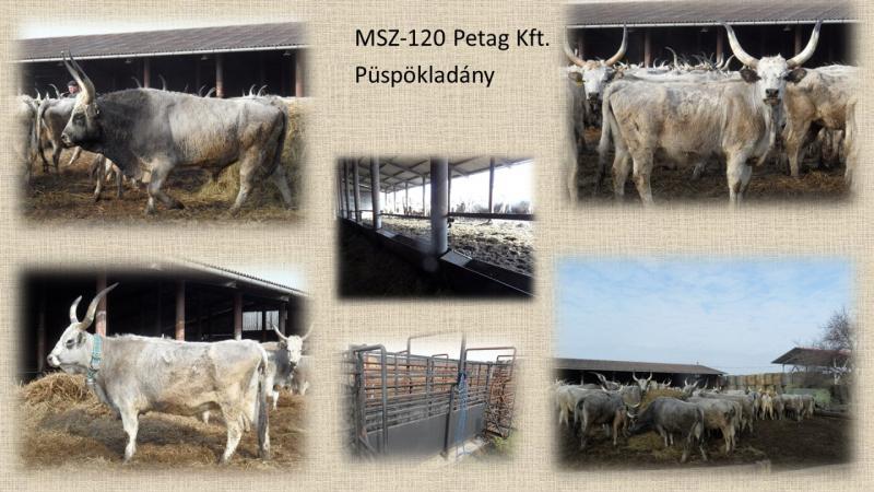MSZ120_Petag kft.