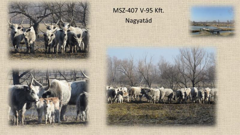 MSZ407_V-95 Kft.