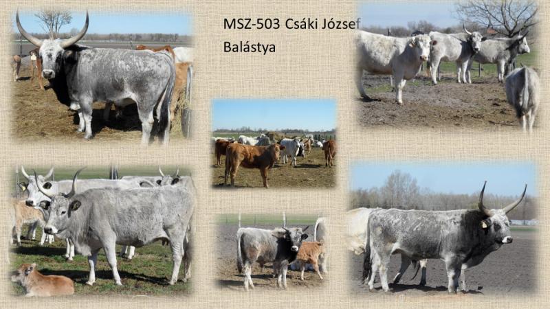 MSZ503_Csaki Jozsef