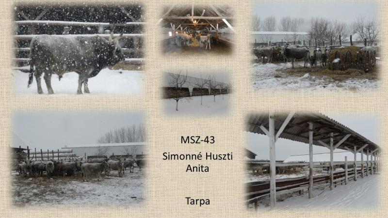 MSZ-43 Simonné Huszti Anita
