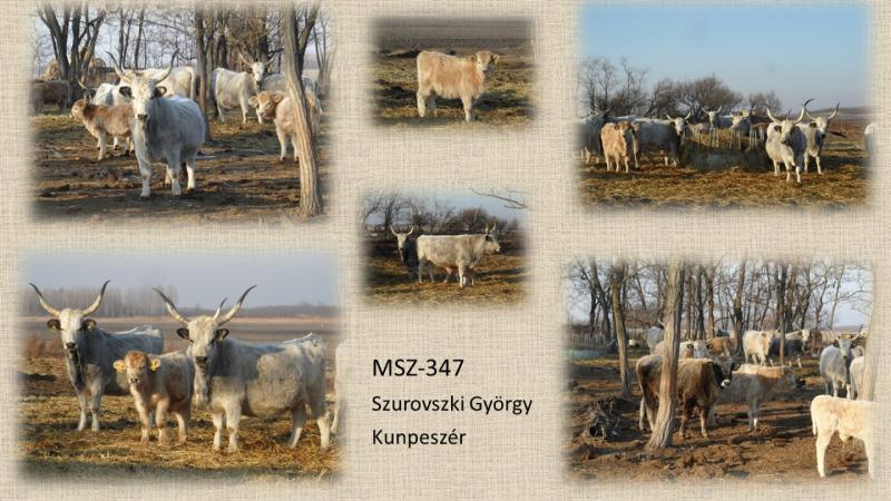MSZ-347 Szurovszki György