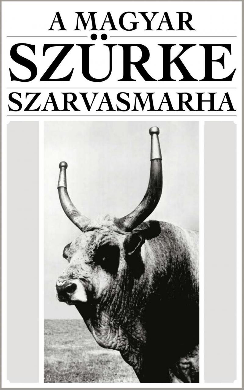 A MAGYAR SZURKE SZARVASMARHA