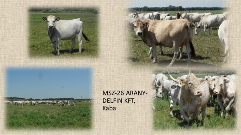MSZ-26 ARANY-DELFIN KFT